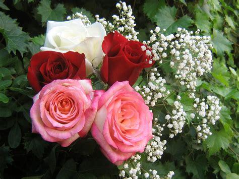 world beautiful images beautiful roses