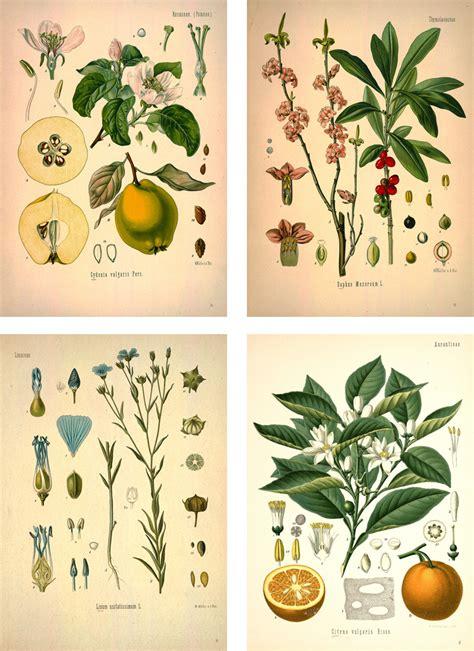 how to make botanical prints vintage botanical prints chippasunshine