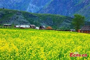 Rural landscape in Kaba County, NW China's Xinjiang ...