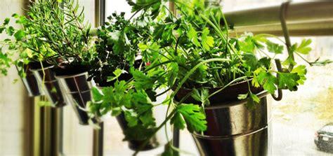 Diy Window Herb Garden From Ikea Pots
