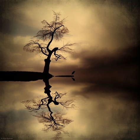 611 Best TreesÁrboles Images On Pinterest