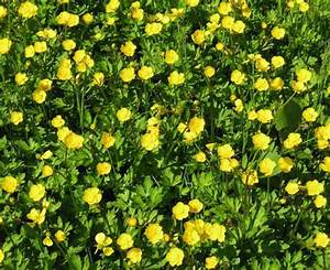 Quiz on Common Lawn Weeds, Recognition and Identification