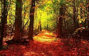 Fall, Forest, Windows, Orangeleaf, Nature, Autumn, Amazing, Dual, Monitor, Tree, Jpg