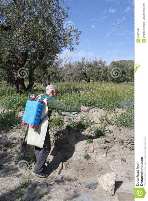 Elderly Farmer Spraying Weed Pesticide Royalty Free Stock