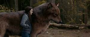 These 5 Movies Redefined The Way We Look At Werewolves ...