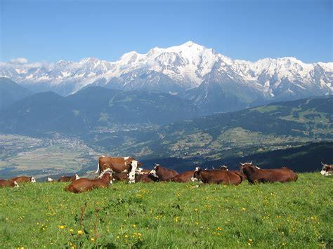 le plateau des b 233 n 233 s savoie mont blanc savoie et haute savoie alpes