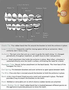Ortho Diagram  U0026 Glossary