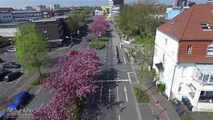 Theodor Heuss Straße : japanische kirschbl te 2015 an der theodor heuss stra e herten cherry blossom in herten 4k ~ A.2002-acura-tl-radio.info Haus und Dekorationen