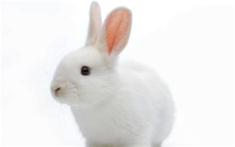 Why not to buy a bunny this Easter