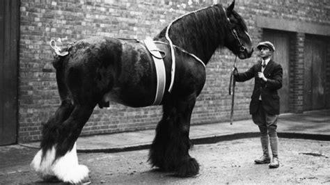 horse shire oldest bbc england