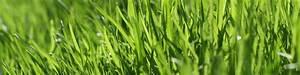 Rasen Düngen Wässern : rasen kalken so machen sie zu sauren rasenboden wieder fit ~ Markanthonyermac.com Haus und Dekorationen