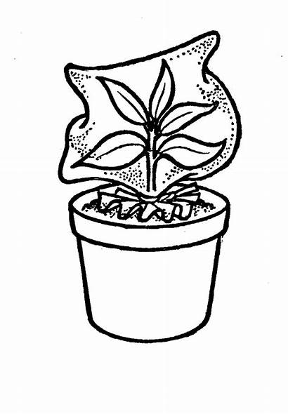 Plant Bag Potted Plastic Drawing Clipart Garden