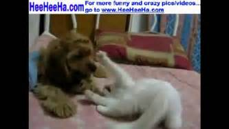 Funny Sayings Cats and Dogs Fighting