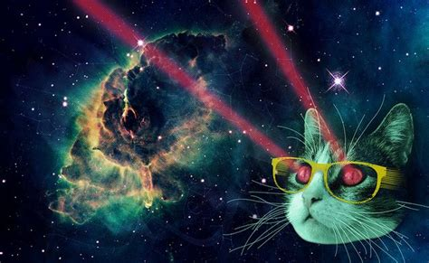 cat laser space cat wallpaper cats cats cat
