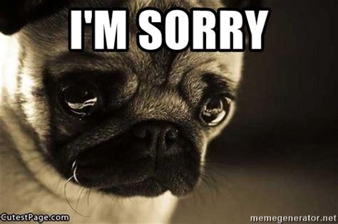 Sad Pug Meme I M Sorry Sad Pug Puppy Meme Generator
