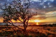 Landscape Tree Sunset