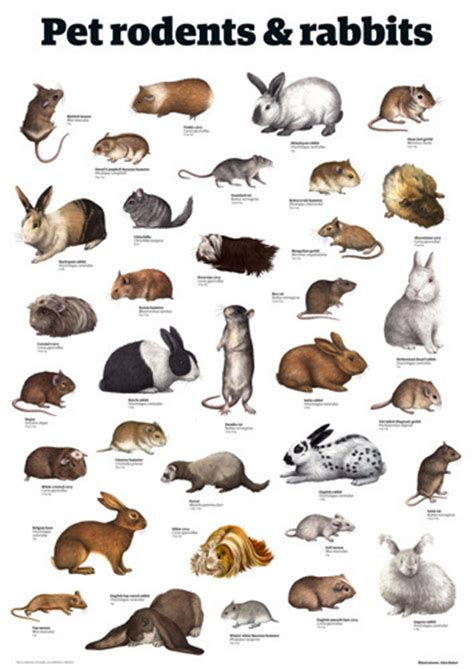 Pet rodents & rabbits Art Print by Guardian Wallchart