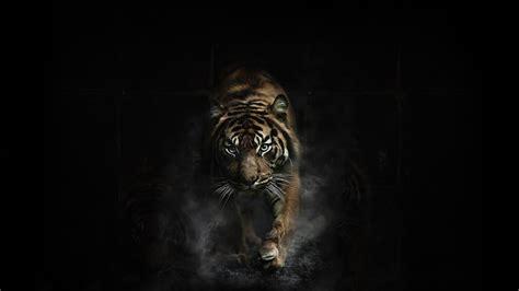 Borderlands 2 Wallpaper Hd Tiger Wallpaper Download Tiger Hd Wallpapers For Free Lanlinglaurel Com