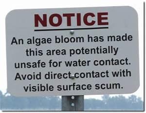 Algal bloom scum skimmer
