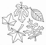 Coloring Leaves Pages Tropical Leaf Palm Getdrawings sketch template