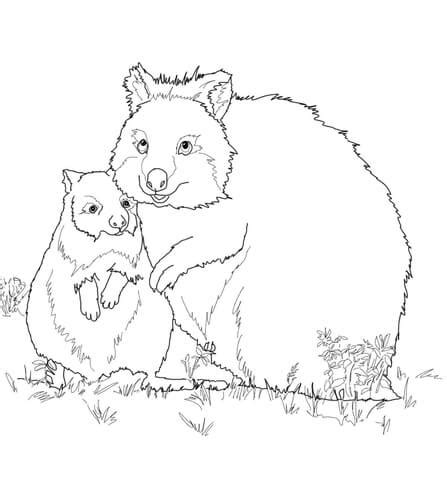 mom  baby quokka coloring page  printable coloring pages