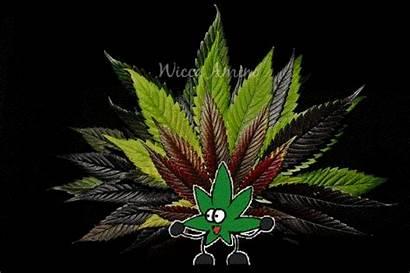 Marihuana Cannabis Leaves Seedling Wicca