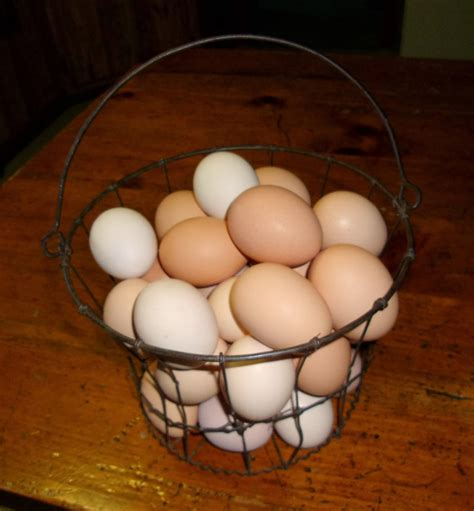 are eggs vegetarian vegetarian eggs community chickens