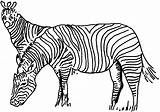 Zebra Coloring Pages Zebras Animals Template Animal sketch template