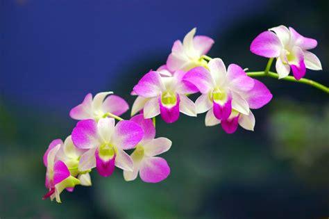 bunga  indah  menakjubkan ayochat indonesian