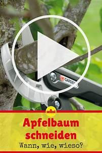 Apfelbaum Schneiden Wann : apfelbaum schneiden apfelb ume schneiden baum schneiden und apfelbaum ~ Watch28wear.com Haus und Dekorationen