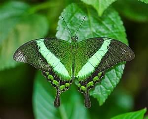 Blok888: Top 10 Most Beautiful Butterflies in the world
