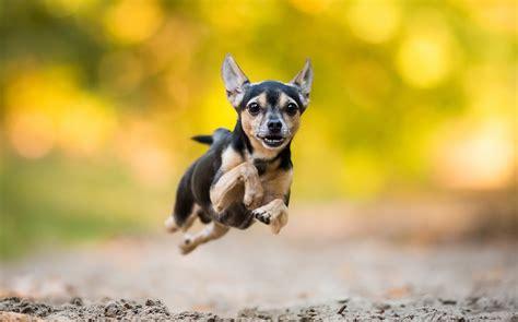 die  besten hunde hintergrundbilder