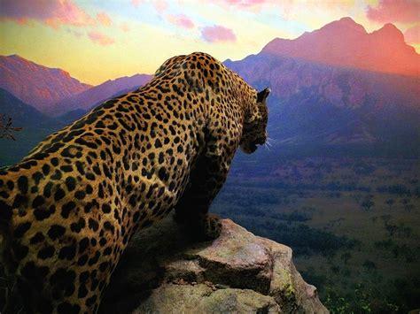 Cheetah standing on gray cliff while watching the horizon ...