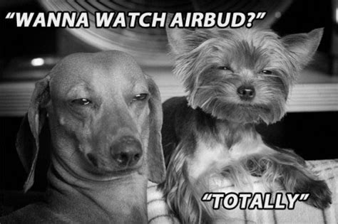 Stoned Dog Meme - stoned dog memes are so hot right now gallery worldwideinterweb