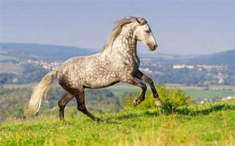 horse names andalusian lusitano female list stockfotos