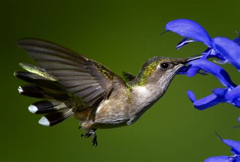 gayle pille gotta love those hummingbirds don t give