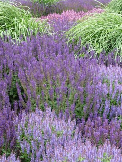 bloemen geel lange steel tuin paars en blauw bloeiende vaste planten heesters en