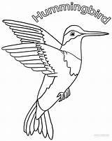 Hummingbird Coloring Pages Hummingbirds Printable Drawing Bird Humming Cool2bkids Birds Sheets Cartoon Sound Flowers Adult Templates Getcoloringpages Getdrawings Template sketch template