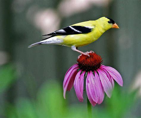 plants  birds audubon connecticut