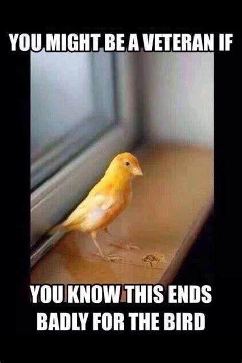 yellow birdwith  yellow bill hahaha gotta love