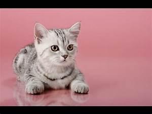 Funny Cats! (20... Funny Cat Videos