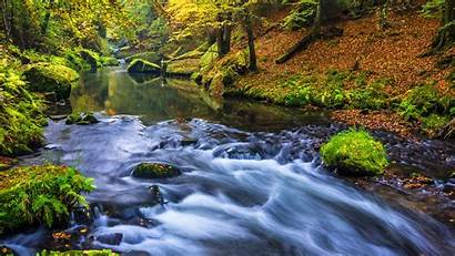 Nature Forest River Wallpapers Definition Wallpapers13