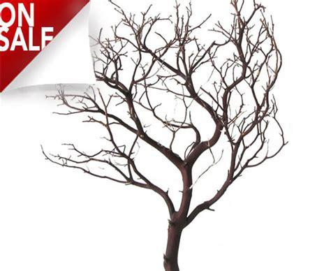 manzanita branches  blooms  branches    ft