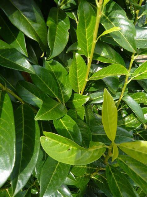 Heidelbeeren Pflanzen Zeitpunkt Heidelbeeren Richtig