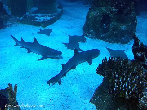 sea aquarium california 10 things not to miss at legoland california resort the world is a book