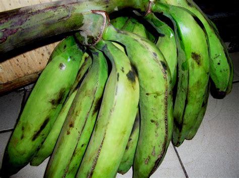comment cuisiner des bananes plantain la banane plantain comment fertiliser et prevenir les maladies pour une meilleure production