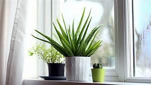 Plante Detoxifiante : 5 bonnes raisons de cultiver un aloe vera chez soi ~ Melissatoandfro.com Idées de Décoration