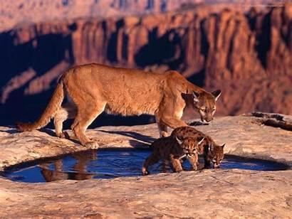Wildlife Amazing Predators Wallpapers