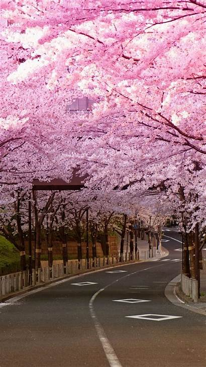 Blossom Cherry Japan Iphone Wallpapers Road Blossoms