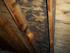 Black Mold On Wood